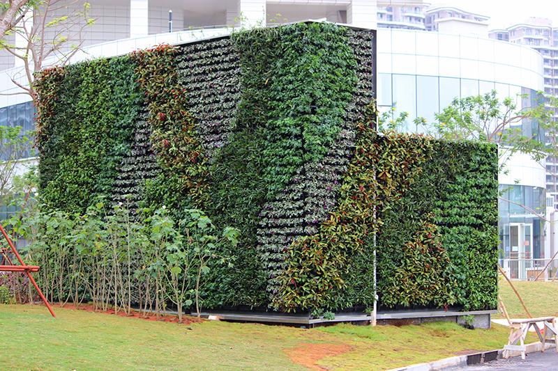 室内植物墙是一种新型的墙面装修设计,利用植物的自然生长来构造出一墙面。
