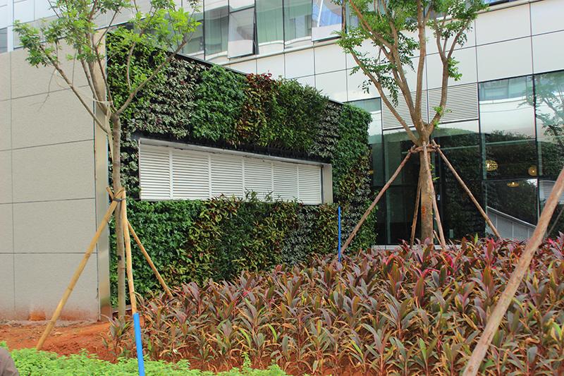 经过精心设计及培植,再装饰以墙顶适合植物生长的灯具,使植物墙更显美观。